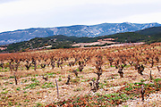 Chateau de Nouvelles. Fitou. Languedoc. The vineyard. France. Europe. Mountains in the background.