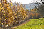 A truffles forest, actually a plantation Truffiere de la Bergerie (Truffière) truffles farm Ste Foy de Longas Dordogne France
