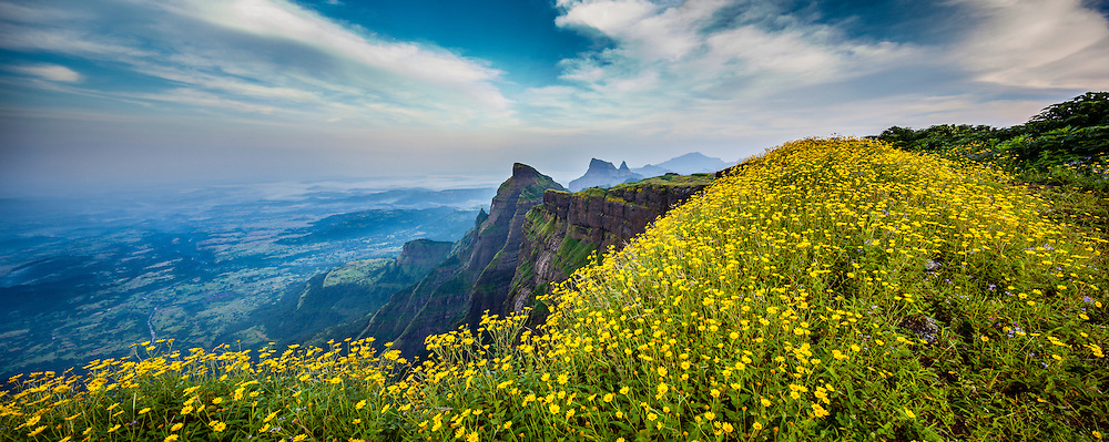 "Natural marvel, the western cliff of Mount Harishchandragad, popularaly known as ""KOKAN-KADA"",  sonaki flowers are in full bloom during monsoon,<br /> The north Western Ghats of India, very reach in bio diversity, the lateritic plateau allows many species of grass and small water plants to grow during the monsoon. Maharashtra, India."