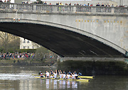 Putney, London, Cambridge Goldie crew, CUBC,  celebrate, as they pass under Chiswick bridge, after beating Oxford Isis, OUBC, 156th University Boat Race, River Thames, between Putney and Chiswick, on the Championship Course.  Saturday  03/04/2010 [Mandatory Credit Karon Phillips/Intersport Images]<br /> Cambridge Goldie Crew, Bow  - Wanne KROMDIJK, George LAMB, <br /> Mike THORP, Matt WHALEY, Hardy CUBASCH, Joel JENINGS, Moritz SCHRAMM, Stroke -  Geoff ROTH and Cox - Elizabeth BOX