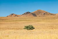 https://Duncan.co/tree-at-antelope-island
