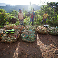 Indigenous Q'eqchi farmers taking their pineapples to market wait for a pickup truck to travel to the nearby town.