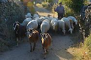 Shepherd with his sheep, Faia Brava reserve, Coa valley, Portugal, Western Iberia rewilding area
