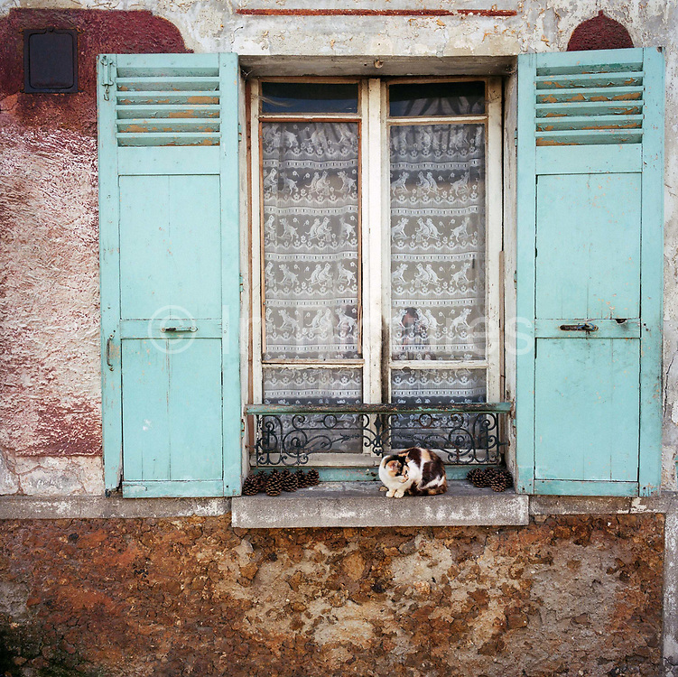 A typical old French house window and shutters with a curious cat sitting on the ledge in the French town of Gonesse, a town to the north of Paris. The puss sits looking at something close-by, surrounded by drying pine cones and beneath old fashioned lace curtains that have images of cats in their design. The exterior is slightly shabby, with unpainted and rusting features.