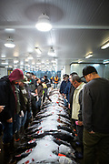 Honolulu, HI - November 24, 2018: At the Honolulu Fish Auction at Pier 38.<br /> <br /> <br /> Photos by Clay Williams.<br /> <br /> © Clay Williams - http://claywilliamsphoto.com