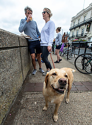 "© Licensed to London News Pictures. 04/07/2020. London, UK. Sam Harvey 37 and Kate Dasilva 38 with their dog Maggy a Yellow Labrador enjoy a pint along the River Thames at Barnes in South West London on ""Super Saturday"" as members of the public flock to pubs, restaurants, hairdressers, hotels and campsites for the first time in over 100 days as the unlocking of the coronavirus pandemic restrictions continues. Photo credit: Alex Lentati/LNP"