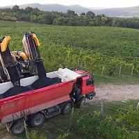 Grape harvest in Hilltop Winery 2018