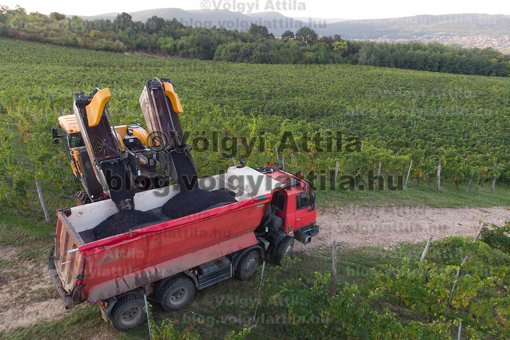 Machine loads harvested grape onto a truck at the Hilltop Wine House near Neszmely, Hungary on Sept. 13, 2018. ATTILA VOLGYI