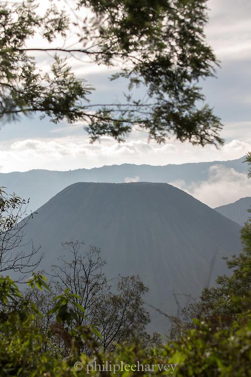 Mount Bromo viewed through trees, Tengger massif, East Java, Indonesia, Southeast Asia