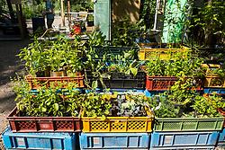 view of  plants for sale at urban city community garden called Prinzessinnengarten in Kreuzberg, Berlin, Germany.