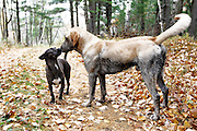 Dogs in the Minnesota north woods.