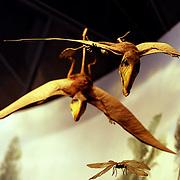 Museum Natural Science- New York