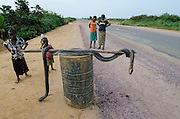 African rock python (Python sebae) killed for bushmeat<br /> Road Brazzaville to Mbomo (N2)<br /> Republic of Congo (Congo - Brazzaville)<br /> AFRICA
