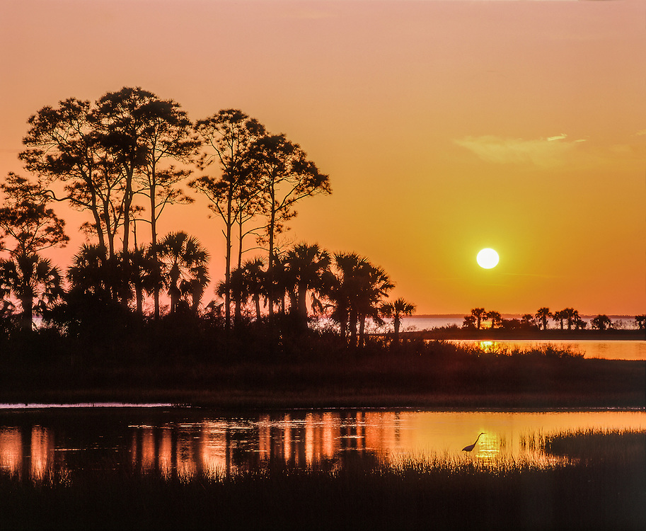 Sunset across marsh, St Joseph Bay, with tree & heron silhouettes, sunset colors in sky & reflections, Cape San Blas, FL