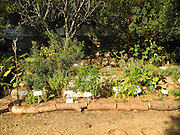 Eco Garden Organic gardening and farming project, Hiafa, Israel