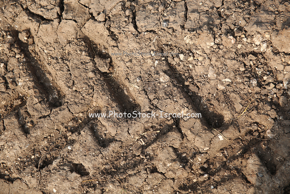 Tractor tracks left in fertile agricultural farmland after winter rain.