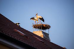 THEMENBILD - Die Freistadt Rust am Neusiedlersee wird auch Hauptstadt der Stoerche genannt. Der Weissstorch (Ciconia ciconia) zaehlt zu den groessten Landvoegeln Europas. Das Federkleid ist bis auf die schwarzen Schwungfedern rein weiss. Schnabel und Staender sind rot. Hier im Bild zwei Weissstörche in ihrem Nest am Kamin eines Ruster Wohnhauses am Dienstag 15. September 2020 in Rust // The free city of Rust on Lake Neusiedl is also called the capital of the storks. The white stork (Ciconia ciconia) is one of the largest land birds in Europe. The plumage is pure white except for the black flight feathers. Beak and pennants are red. Here in the picture two white storks in their nest on the chimney of a house in Rust on Tuesday 15 September 2020. EXPA Pictures © 2020, PhotoCredit: EXPA/ Johann Groder