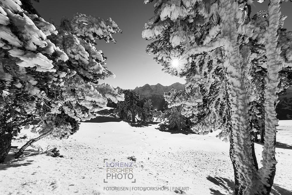 Impressionen vom Burgfeldstand beim Niederhorn nach dem Scheesturm des Sturmtiefs Andrea mit Windverwehungen an Felsen und Bäumen. Blick in die Berner Hochalpen mit Eiger; Mönch und Jungfrau