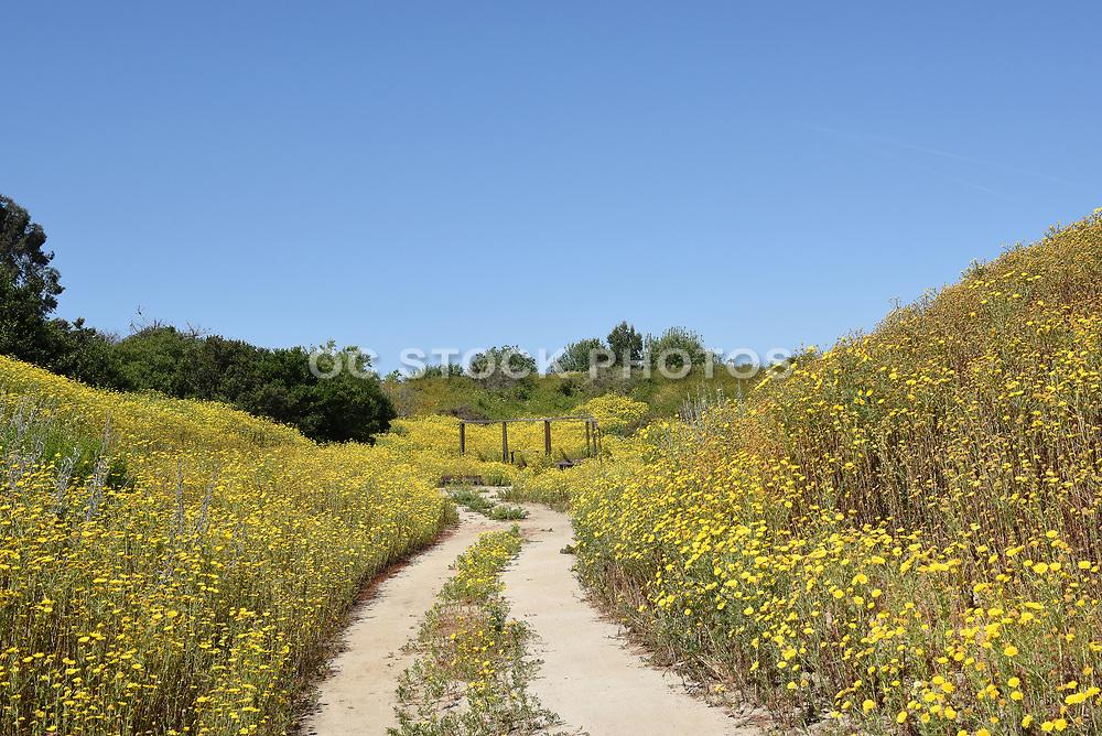 Santa Ana Nature Trail at the Santa Ana Heritage Museum