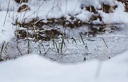 THEMENBILD - Gras steht aus einer zugefrorenen Wasseroberfläche eines Teichs, aufgenommen am 06. Februar 2019 in Kaprun, Oesterreich // Grass stands from a frozen water surface of a pond, in Kaprun, Austria on 2019/02/06. EXPA Pictures © 2019, PhotoCredit: EXPA/Stefanie Oberhauser