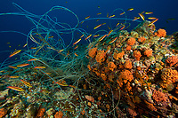 Longline fishing line tangled on a seamount in the National Park<br /><br />Coiba Island<br />Coiba National Park<br />Panama<br />Siren's Point dive site