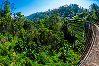 Nine Arch Railway Bridge, Demodara, Ambagollapathana near Ella, Uva Province, Sri Lanka.
