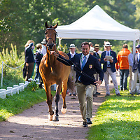 Driving - Horse Inspection