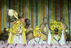June 9, 2017 - Kolkata, West Bengal, India - International Society for Krishna Consciousness (ISKCON) priest and Sanyasi or holy man pour milk, honey, curd and water Jagannath, Balabhadra on Lord Jagannath, Balabhadra and Subhadra on the occasion of  Snan Yatra or bathing ceremony ahead of their Ratha Yatra or chariot festival in Kolkata. (Credit Image: © Saikat Paul/Pacific Press via ZUMA Wire)