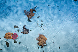 leaves and rocks in a frozen puddle