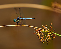 Dragonfly. Image taken with a Nikon D850 Camera and 70-300 mm VR lens