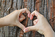 I love trees hands form a heart shape on a tree trunk