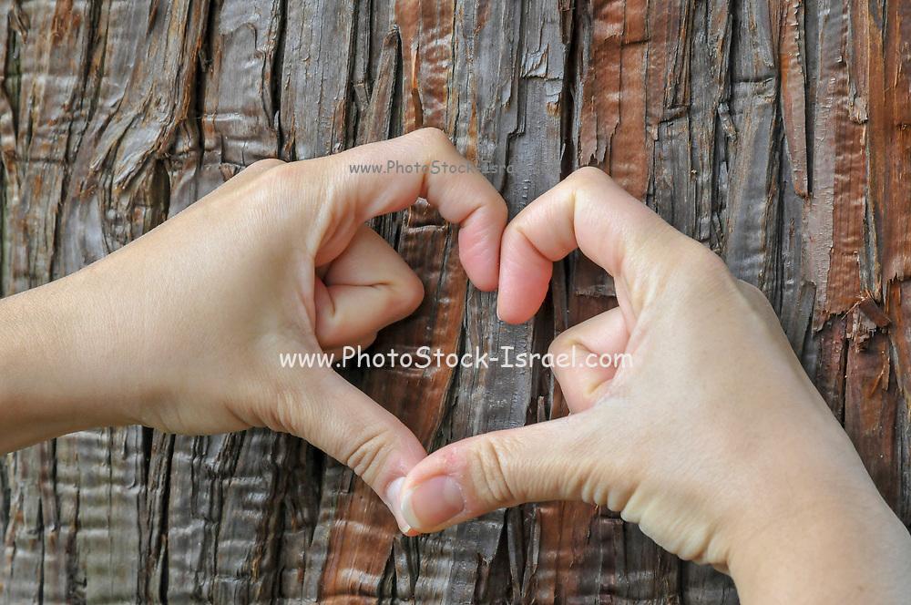 I love trees hands form a heart shape on a tree trunk