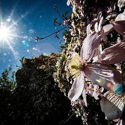 Sunny garden today