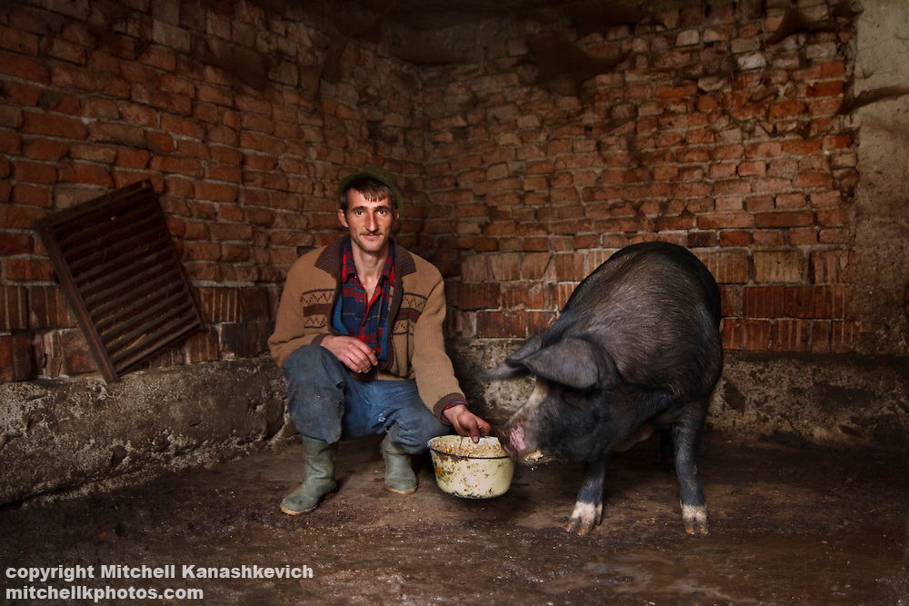 Man in a traditional transylvanian hat feeding his pig in a pigsty. Rural Transylvania