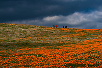 DSC_4708<br /> <br /> Antelope Valley Califonia Poppy Nature Reserve<br /> © 2019, California State Parks.<br /> Photo by Brian Baer