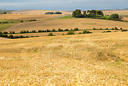Chalk downland landscape fields of stubble looking west over East Kennett long barrow, Wiltshire, England, UK