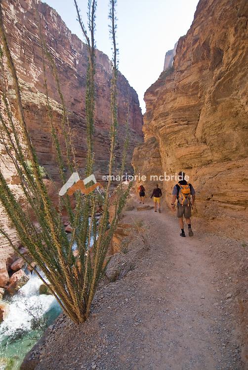 Hiking up Havasu Creek Canyon on the Colorado River  in the Grand Canyon National Park, Arizona.