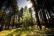 A sunlit Spring walk through the Newborough Forest towards the beautiful and dramatic island of Llanddwyn.