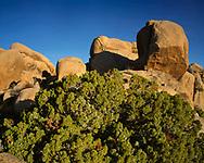 CADJT_116 - USA, California, Joshua Tree National Park, Monzonite granite boulders and California juniper in early morning near Jumbo Rocks.