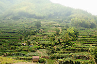 Terraced farming on hillside in China.