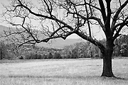 Cade's Cove, Great Smoky Mountain National Park