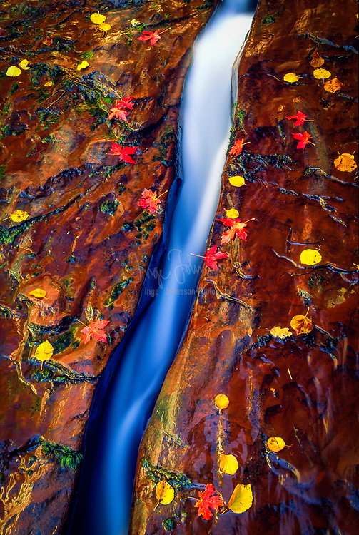 Water runs through a narrow slit carved by the water in the soft sandstone in Zion National Park, Utah, USA