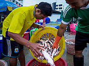 12 JULY 2018 - SAMUT PRAKAN, SAMUT PRAKAN, THAILAND: Workers sort fish on the pier at Pak Nam Market in Samut Prakan, Thailand. Fish consumption recently hit a record high according to a report published this week by the United Nations Food and Agriculture Organization. The FAO reported that global fish production peaked at about 171 million tonnes in 2016, 47 percent of it from fish farming. The FAO also reported that global fish consumption between 1961 and 2016 was rose nearly twice as fast as population growth. In 2015, fish accounted for about 17 percent of the animal protein consumed globally. This has ramifications for Thailand, which has one of the world's largest fish and seafood industries. About 90% of Thailand's seafood production is exported, which accounts for about 4% of Thailand's exports.    PHOTO BY JACK KURTZ