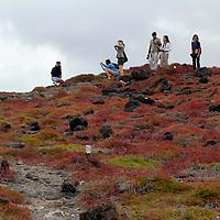South America, Ecuador, Galapagos, South Plaza Island. Visitors of the Galapagos.