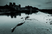 Rhuddlan and it's castle have been the site of numerous Welsh English battles in history. The castle was originally mostly built of wood and ships used to moor alongside the jetty. Today, a Royal swan peacefully glides amongst the shadows of the castle's trees and a huge driftwood log is the only wooden movement along this shallow river today.