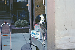 Dog In Back Of Delivery Truck
