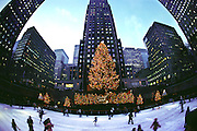 Rockefeller Center Ice Rink and Christmas tree, New York City. Shot with a very wide-angle lens that distorts the buildings on the edges of the frame. USA.