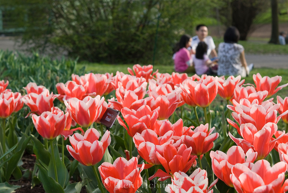 Family enjoying the Brooklyn Botanic Garden on a beautiful spring day