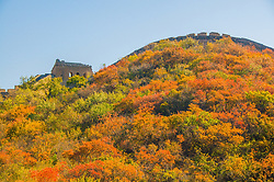 June 23, 2017 - Beijin, Beijin, China - Beijing, CHINA-Oct 17 2012: (EDITORIAL USE ONLY. CHINA OUT)..The Great Wall. Autumn scenery of Badling National Forest Park can be seen in Beijing, Oct 17th, 2012. (Credit Image: © SIPA Asia via ZUMA Wire)