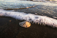 A wave washes over a sanddollar on the beach in Galveston, Texas on Dec. 28, 2007. (Photo by Kevin Bartram)